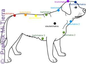 hond chakra